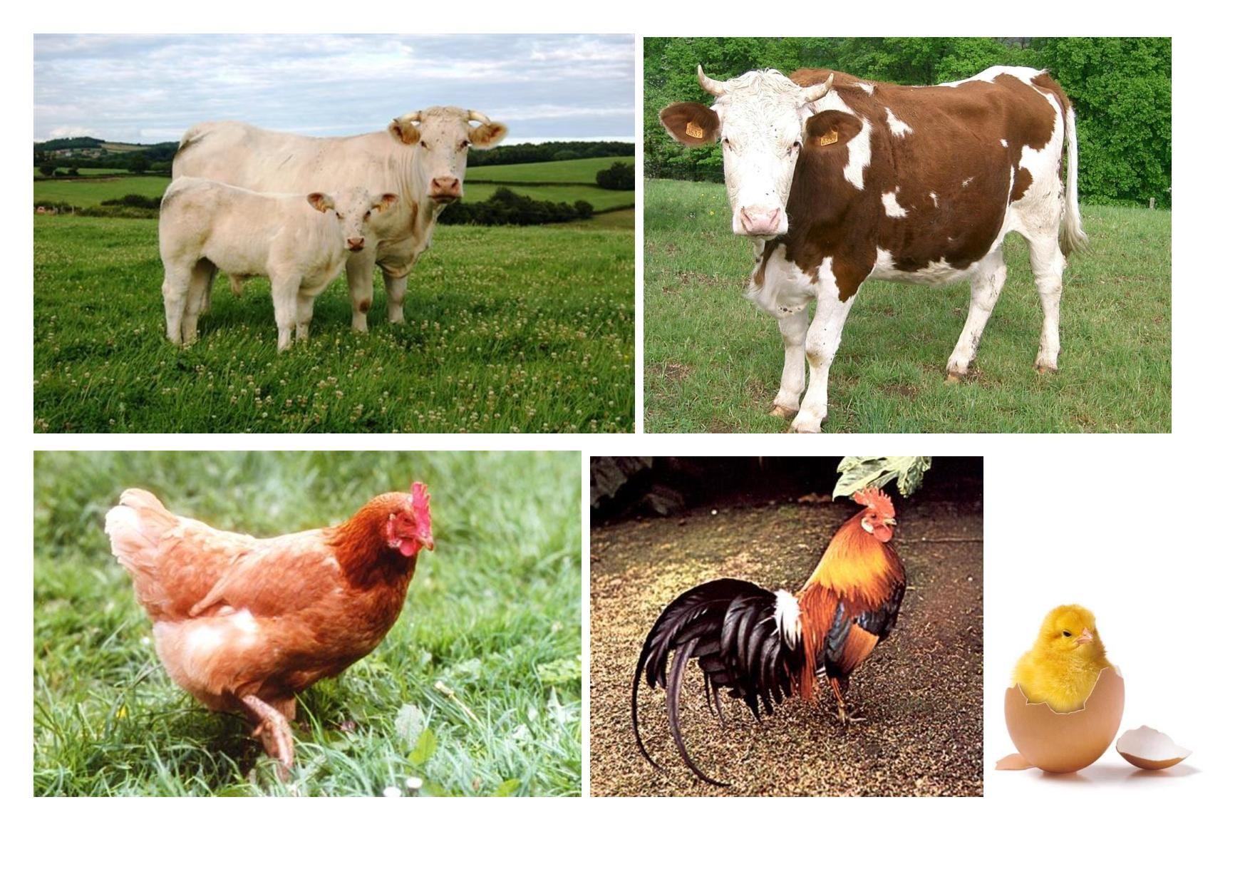 Imagier des animaux de la ferme - Imagier animaux de la ferme ...